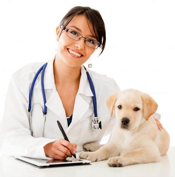 đào tạo trung cấp thú y